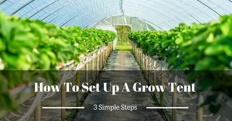 how to set up a grow tent
