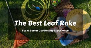 Get Spotless Results With The Best Leaf Rake