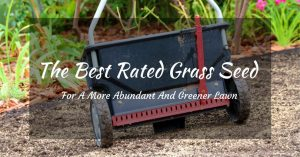 The Best Rated Grass Seed For A More Abundant And Greener Lawn