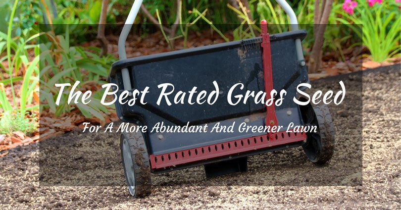 best-rated-grass-seed