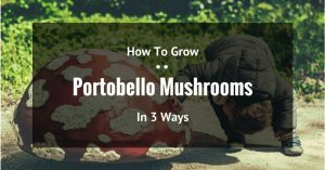 How To Grow Portobello Mushrooms In 3 Ways