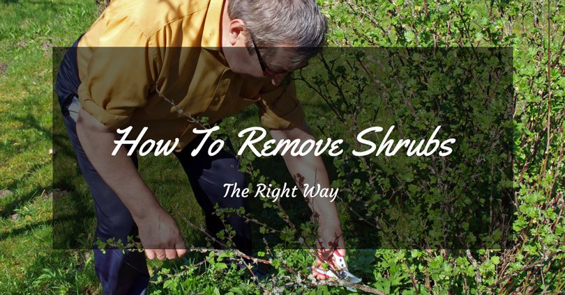 how to remove shrubs