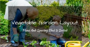 Vegetable Garden Layout Plans And Spacing That Is Suited