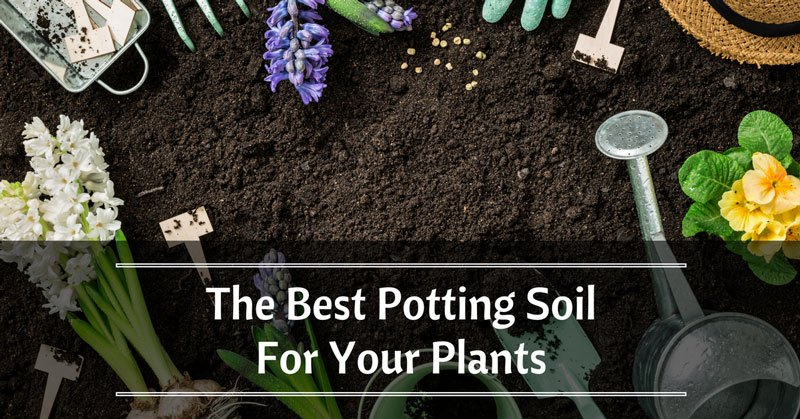 Coca Crop & The Best Potting Soil For Your Plants