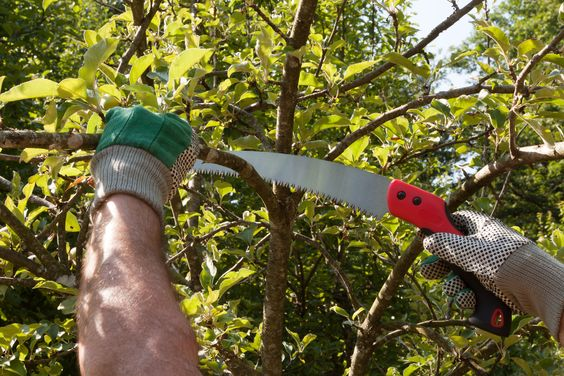 best pruning saw 2019