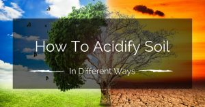 How To Acidify Soil In Different Ways