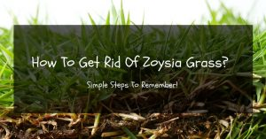 How To Get Rid Of Zoysia Grass? Simple Steps To Remember!