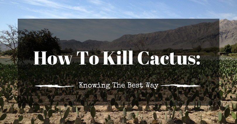 how to kill cactus