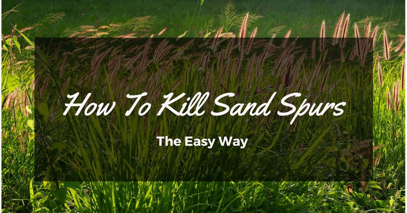 how to kill sand spurs