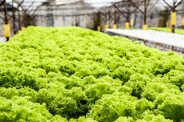 Using-A-Hydroponic-System
