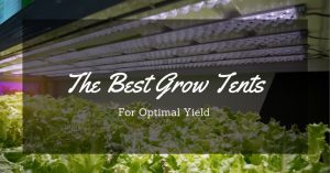 Find Out The Best Grow Tent For Your Plants