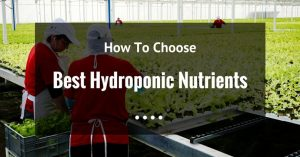 The Best Hydroponic Nutrients For Healthier Plants