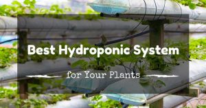 The Best Hydroponics System: How to Start Your Indoor Garden