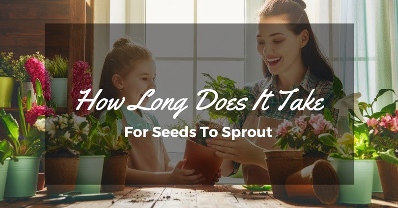 how-long-does-it-take-for-seeds-to-sprout