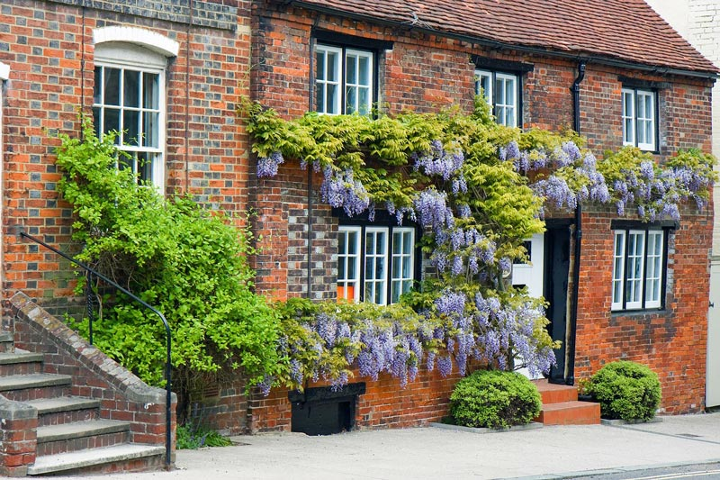 how to kill wisteria without chemicals
