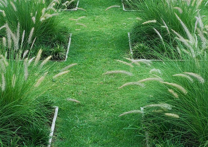 how to kill pampas grass with chemicals