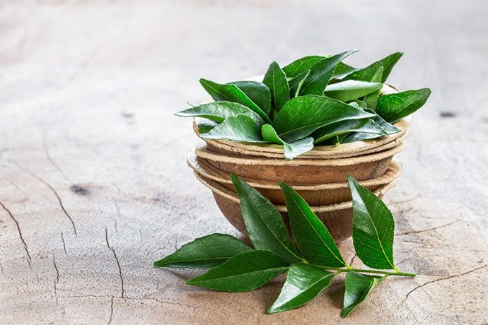 how to grow curry leaves plant from cuttings