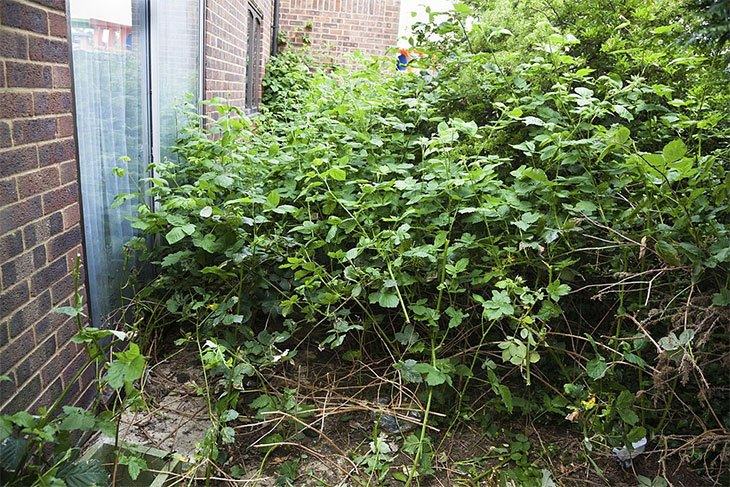 how to remove shrubs with a jack