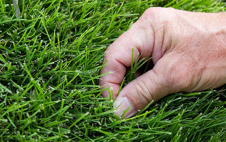 how to get rid of zoysia grass naturally
