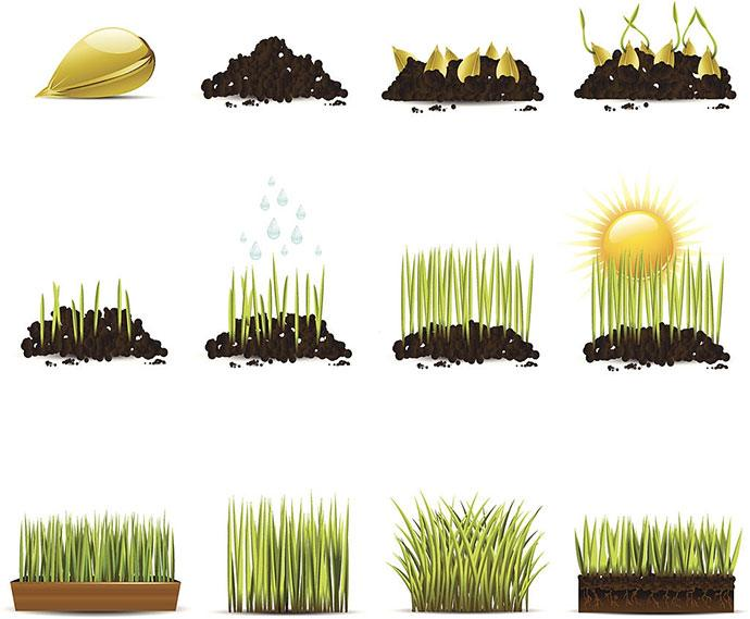how long for grass seed to germinate in august