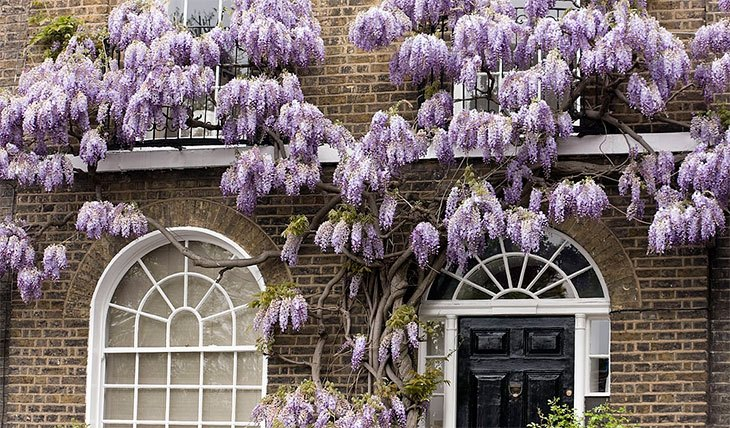 how to kill overgrown wisteria