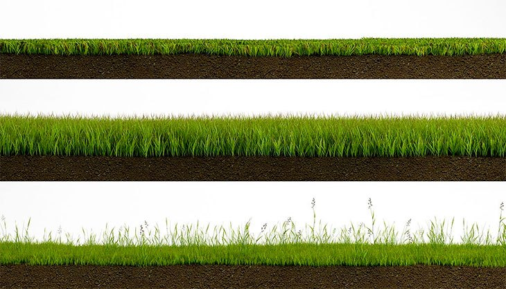 how long for rye grass seed to germinate