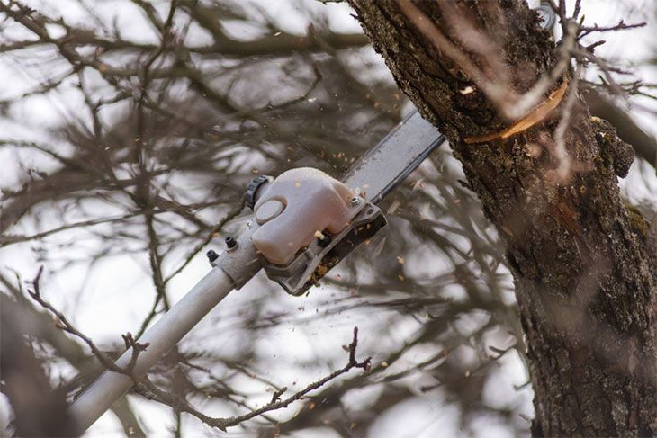 best electric pole saws for tree trimming