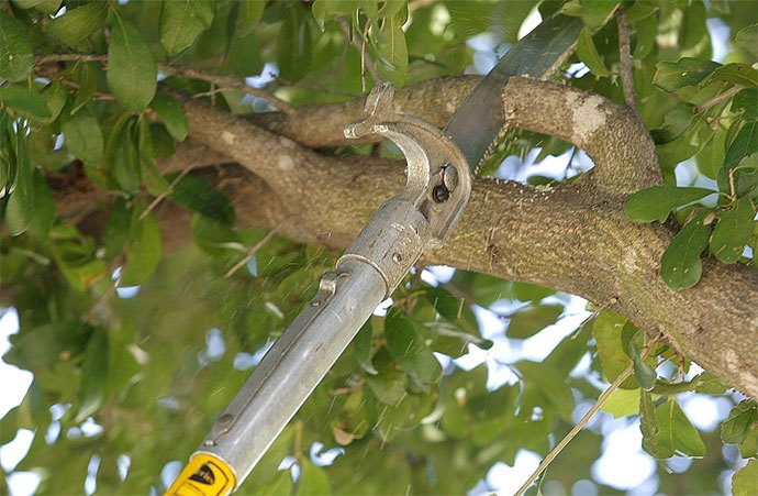 best electric pole saw for the money