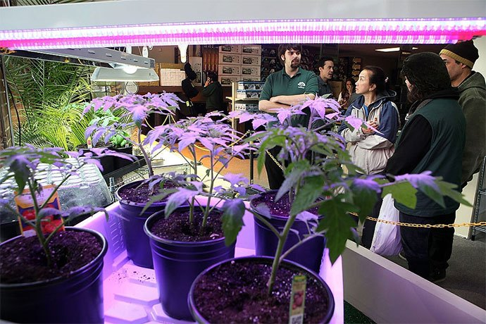 best hydroponics system for vegetables
