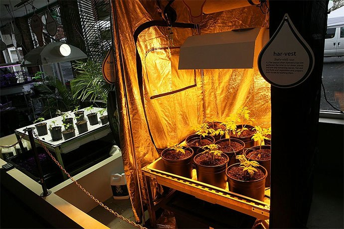best hydroponics system for strawberries