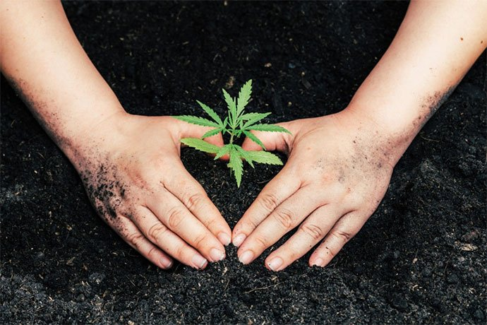 best soil for cannabis clones