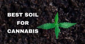 Finding the Best Soil for Cannabis – Top 7 List